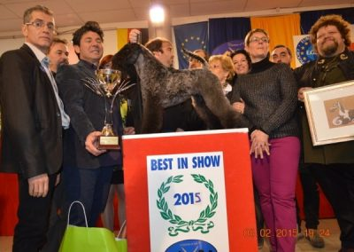 BEST in SHOW Ciseaux d'Or 2015